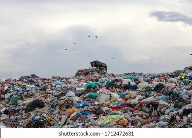 Selangor , Malaysia- 23 April 2020 : Bulldozer working on landfill with birds in the sky