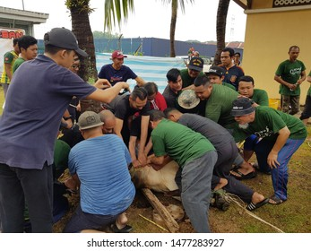 SELANGOR, MALAYSIA - Aug 11, 2019: Some men are holding a cow during the process of slaughter at a qurban feast celebrated by Muslims around the world.