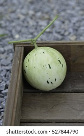 select focus of meteor white honeydew melon in wooden box