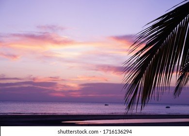 Select focus Silhouette of Coconut leaves  at twilight sky background.