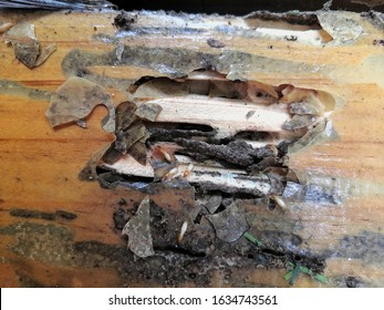 select fogus group of termites eat wood decay and are harmful to the house
