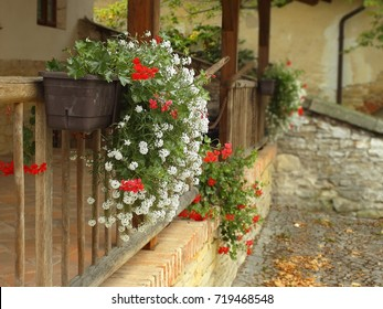 Selected focus. Blooming red and white boxing pelargonium flowers on wood railings and blurry background farm
