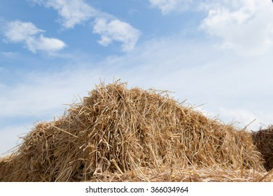 selected focus center Rice straw  on blue sky background, Thailand harvest.