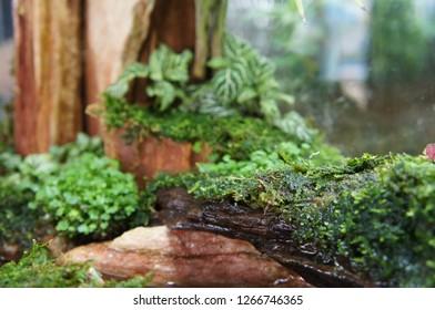 Selected Focused Aquascape Terrarium Design Small Stock Photo Edit Now 1266746365