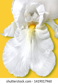 The selected object is a white iris flower.