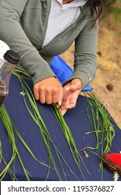 Selecting the groups of blades that will become a sweetgrass braid.