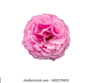 selection of beautiful pink rose flower isolated on white background with paths
