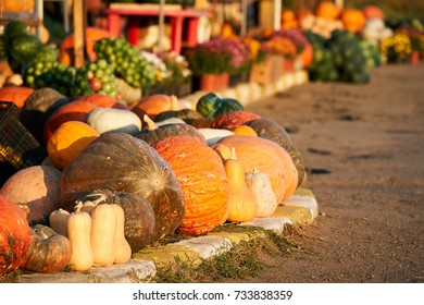 Selection of big and small pumpkins ready for Halloween, on sale near the road