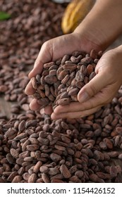 Selection of completed cocoa seeds must be dried before into sacks.