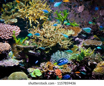 Selection of Corals forming a reef surrounded by fish, Sealife in abundant colors, underwater seascape.