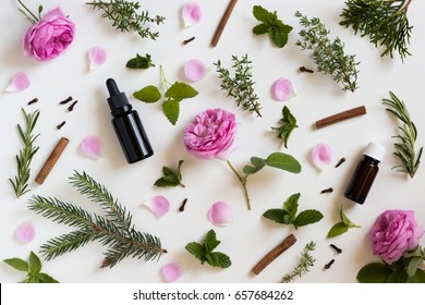 Selection of essential oils and herbs on a white background - peppermint, rose, melissa, thyme, rosemary, cinnamon, clove, thuja