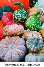 Selection of fancy pumpkins and gourds.