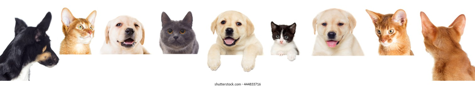 selection of pets