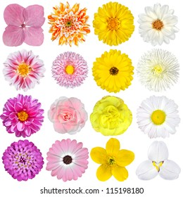Selection of  Pink, Orange, Yellow and White Flowers Isolated on White Background. Red, Pink, Yellow, White Colours including rose, dahlia, marigold, zinnia, straw flower, sunflower, daisy, primrose