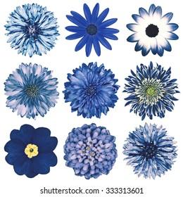 Selection of Various Flowers in Blue Vintage Retro Style Isolated on White Background. Daisy, Chrystanthemum, Cornflower, Dahlia, Iberis, Primrose, Gerbera, Rose.