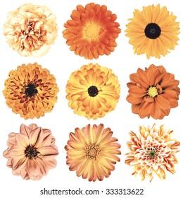 Selection of Various Flowers in Orange Vintage Retro Style Isolated on White Background. Daisy, Chrystanthemum, Cornflower, Dahlia, Iberis, Primrose, Gerbera, Rose.