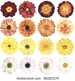 Selection of Various Flowers in Vintage Retro Style Isolated on White Background. Collection Pink, Blue, Yellow, Red, Orange, Daisy, Chrysanthemum, Cornflower, Dahlia, Primrose, Gerbera, Rose