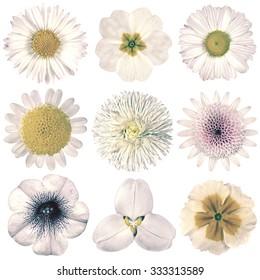 Selection of Various Flowers in White Vintage Retro Style Isolated on White Background. Daisy, Chrystanthemum, Cornflower, Dahlia, Iberis, Primrose, Gerbera, Rose.