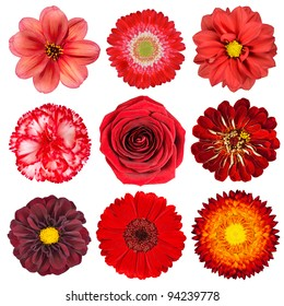 500 Red Flower Background Pictures Royalty Free Images Stock
