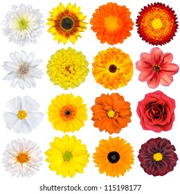 Selection of Various White, Yellow, Orange Flowers Isolated on White Background. Red, Pink, Yellow, White Colours including rose, dahlia, marigold, zinnia, straw flower, sunflower, daisy, primrose