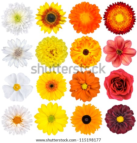 Selection various white yellow orange flowers stock photo edit now selection of various white yellow orange flowers isolated on white background red mightylinksfo