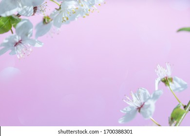 Selective blur, apple tree flowers in spring, delicate pastel background, white petals and yellow stamens on a blue background.