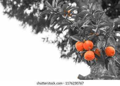 selective color, orange