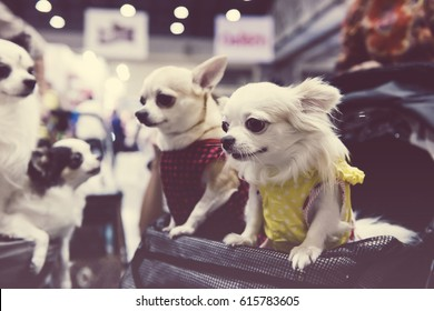 Dog Dress Images Stock Photos Vectors Shutterstock