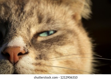 selective focus of a beautiful brown and white domestic cat with a haughty look on a black background