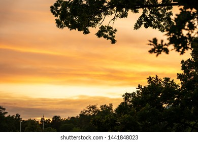 Selective focus of beautiful golden summer sunset sky with trees and branch in the foreground.