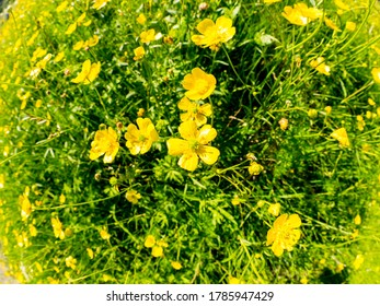 Selective focus. Beautiful yellow flowers on the meadow, fisheye image.