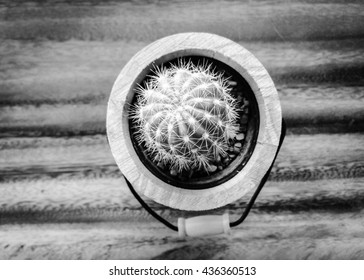 selective focus of cactus in brown potted on wood table, invert color
