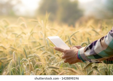 Selective focus close up shot of asian men smart farmer hands in plaid shirt using modern digital technology by tablet computer in barley grain farm field for agriculture industrial development.