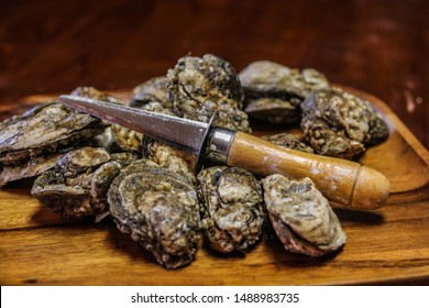 Selective Focus Closeup of Fresh Rappahannock River Oysters on a Wooden Board, with an Oyster Knife, ready to be shucked