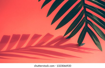 Selective focus of coconut and palm leaf with shadow on colorful  background.Tropical and summer,holiday concepts ideas