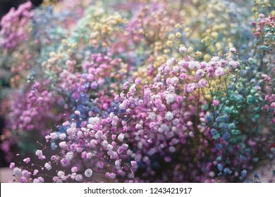 selective focus of colorful or rainbow flowers or Rainbow buds. Chrysanthemum Rainbow Flower. Bouquets of blossom rainbow or multicolor flowers, selective focus. Multi colored daisy flowers pattern