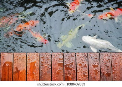 Selective Focus of Droplet on Wooden Terrace with Koi Carp Japanese fish underwater in Koi Pond in raining day.Top view.Pet,Home and Decor Concept.