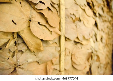 Selective Focus Dry leaves wallpaper in thailand