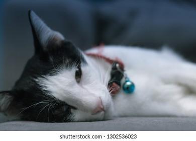 Selective focus eyes of wakeup cat looking at camera