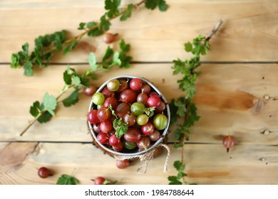 Selective focus. Fresh gooseberries in a bowl on a wooden surface. Gooseberry leaves. Gooseberry harvest.