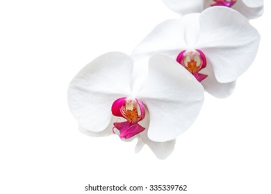selective focus of fresh orchid isolated on white background.