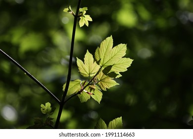 A selective focus of the growing green leaves on the tree branches gleaming under the sunlight