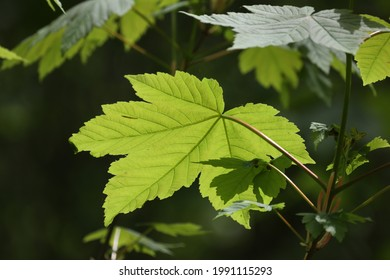 A selective focus of the growing green leaves gleaming under the sunlight