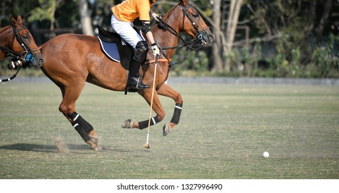 Selective Focus a Horse Polo pony Player are Playing in Match.