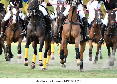 Selective focus horse running in polo game, many horse run.