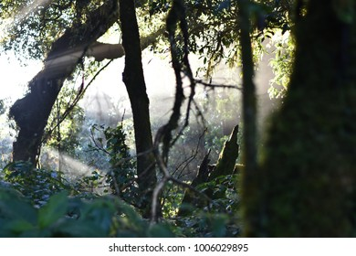 Selective focus Jungle landscape.The forest with sun beam and fog at Doi Inthanon nationnal park at Chiang Mai,Thailand.