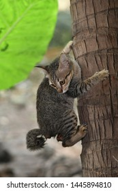 Selective focus A Little cat climbing the trees.