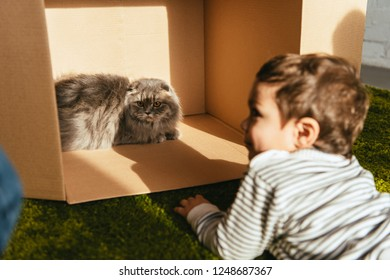 selective focus of little smiling boy laying near british longhair cat in cardboard box at home