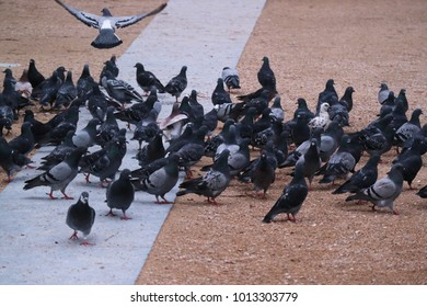 Selective focus of lock of pigeons on the ground in a city