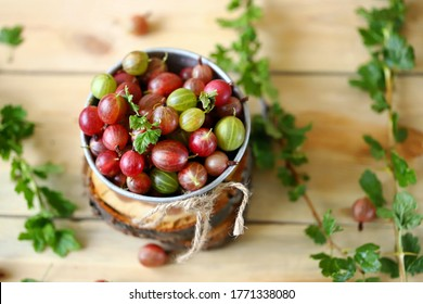 Selective focus. Macro. Gooseberries in a bowl on a wooden surface. Gooseberry leaves and branches. Harvest gooseberries. Rustic style.